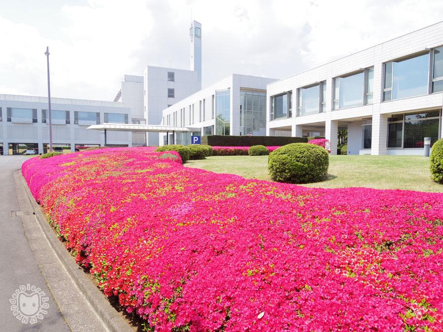 DIC総合研究所とツツジ